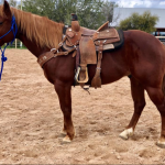 2 Horses recently Sold